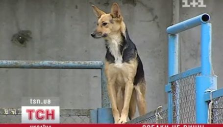 Собаки не винні