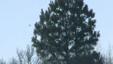 На американский штат Арканзас выпал дождь из мертвых дроздов