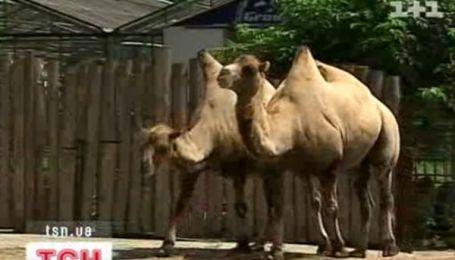З київського зоопарку зникла половина звірів