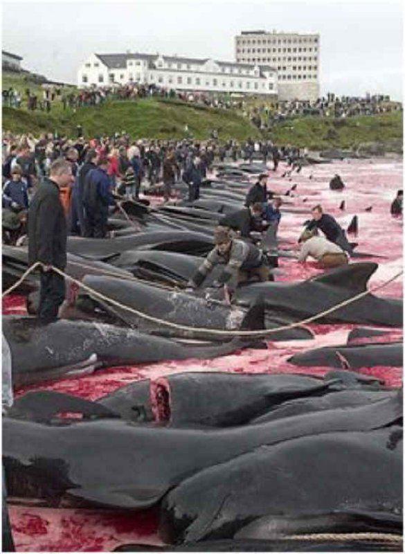 Массовое уничтожение дельфинов макулатура сдать волгоград цена