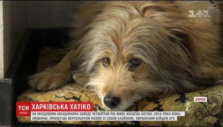 На авиационном заводе в Харькове собака четвертый год ждет своего хозяина
