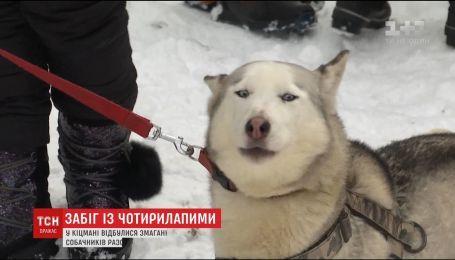 На Буковине состоялись зрелищные гонки с собаками