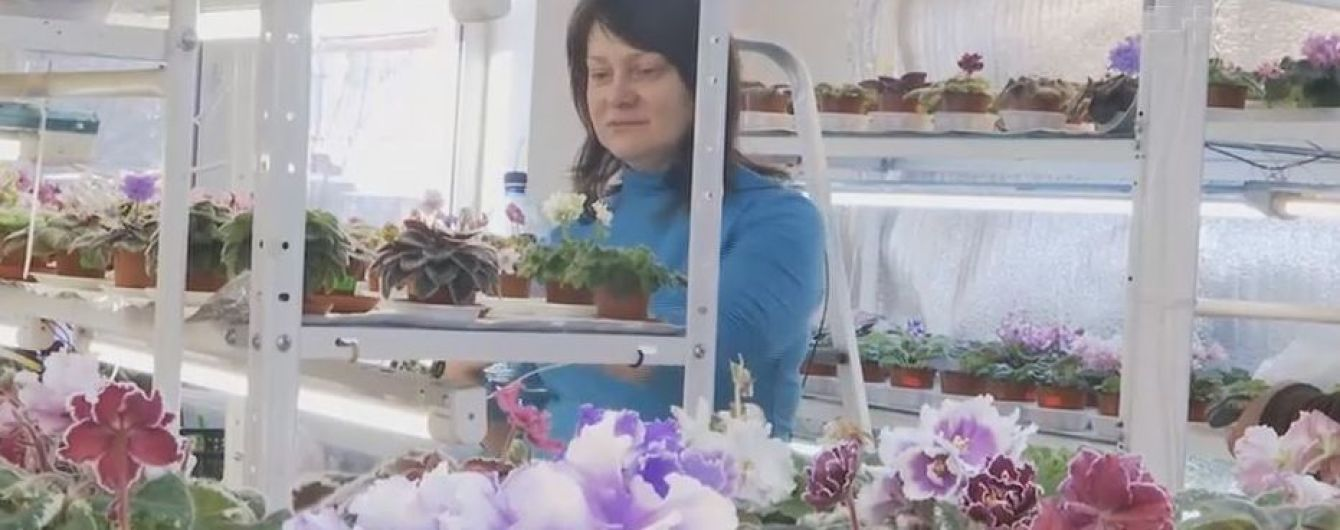 """Селекціонерка фіалок вивела унікальний сорт квітки на честь """"Океану Ельзи"""""""