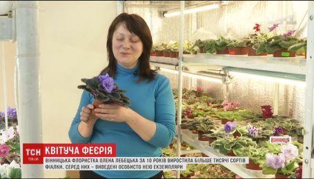 Вінничанка виростила понад тисячу сортів фіалок