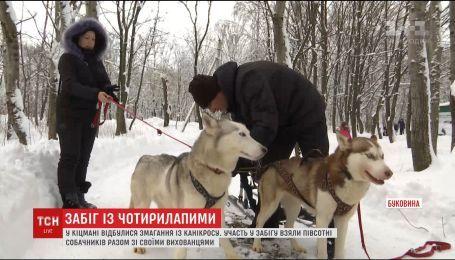 Зрелищые гонки с собаками состоялись на Буковине
