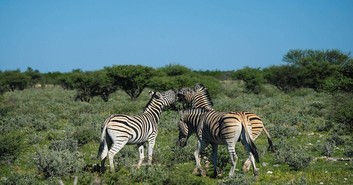 Намибия, это страна, с которой стоит начать знакомство с Африкой
