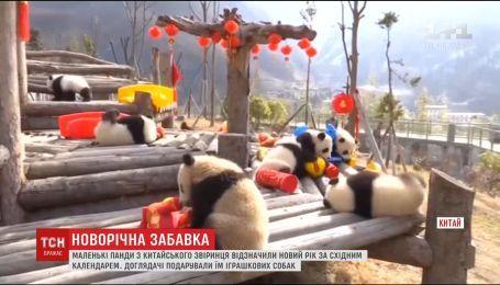Китайські ведмедики відсвяткували Новий рік за Східним календарем
