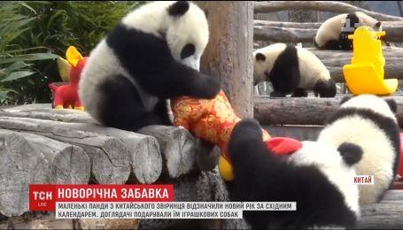 Китайские малыши панд получили подарки в честь начала нового года по восточному календарю