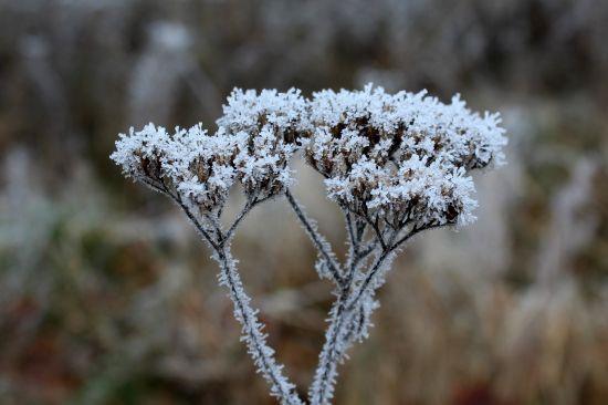 Незначний сніг на сході й тепло на Закарпатті. Якою буде погода 17 лютого
