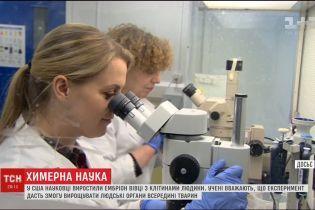 Американские биологи планируют внутри животных выращивать человеческие органы