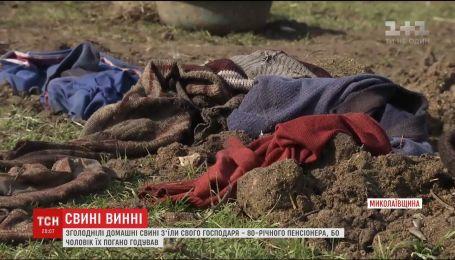 Изголодавшиеся домашние свиньи съели своего 80-летнего хозяина на Николаевщине