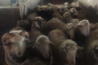На Киевщине под фермой с овцами обнаружили нелегальный подземный спиртзавод