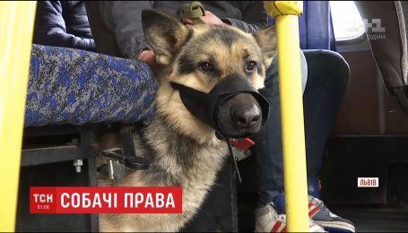 Мужчина два дня не мог выехать из Львова, потому что его собаке не позволяли зайти в автобус