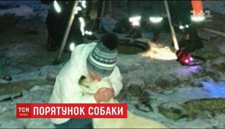 Рятувальники у Дніпрі витягли з колектора теплотраси лабрадора