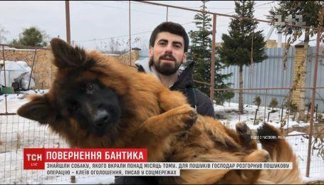 Викраденого в новорічну ніч собаку знайшли