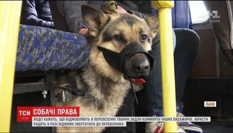 Львовянин обратился за помощью к журналистам из-за отказа водителей брать пассажиров с животными