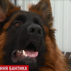 В Киеве нашли похищенного в новогоднюю ночь пса, за которого хозяин хотел заплатить 200 тысяч выкупа