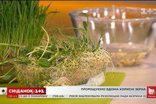 Пророщені зерна: як виростити корисну смакоту у себе на підвіконні
