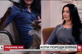 """У гостях """"Сніданку"""" власниця бурманських котів Тетяна Цапенко та її улюбленці"""