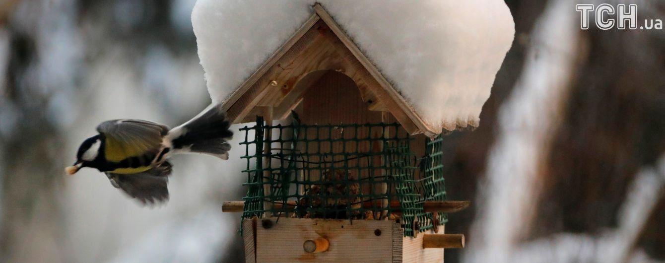 Воскресенье будет с сильными морозами и снегом в отдельных регионах. Прогноз погоды на 25 февраля