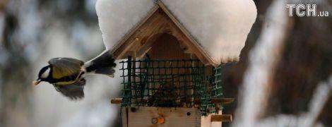 Неділя буде з лютими морозами та снігом в окремих регіонах. Прогноз погоди на 25 лютого