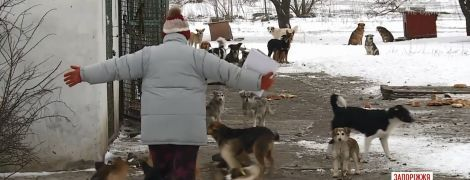 У Бердянську з лайкою і прокльонами розтрощили авто комунальників, які відловлювали собак для притулку