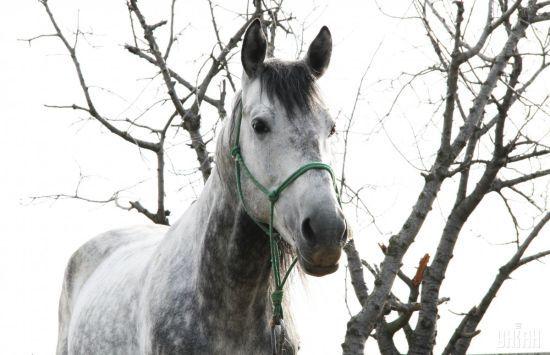 На Івано-Франківщині кобила врятувала п'яного господаря