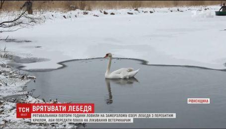 В Ровенской области провели спецоперацию по спасению лебедя