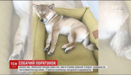 Нашлась собака Ами, которую накануне искала чуть ли не вся столица