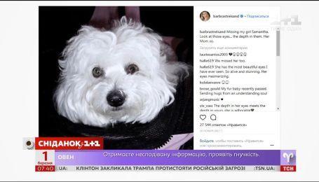 Барбара Стрейзанд клонувала свою улюблену собаку