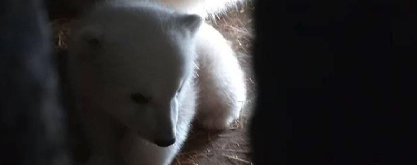 Николаевский зоопарк впервые показал своего трехмесячного медвежонка