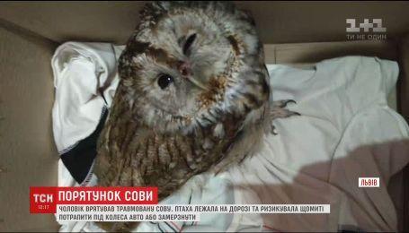 У Львові чоловік врятував травмовану сову, яку ледь не переїхали авто