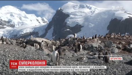 Вчені знайшли величезне поселення пінгвінів Аделі біля берегів Антарктики
