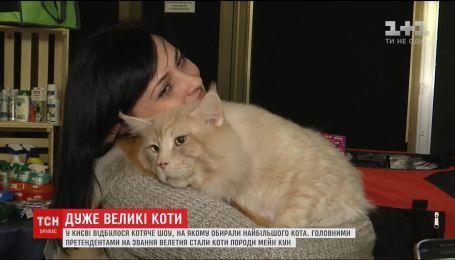 В Киеве выбирали самого большого кота