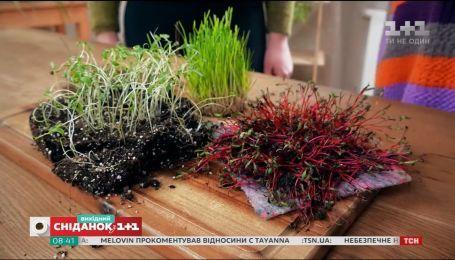 Як виростити на підвіконні наймоднішу зелень сезону – мікрогрін – Зелена ділянка