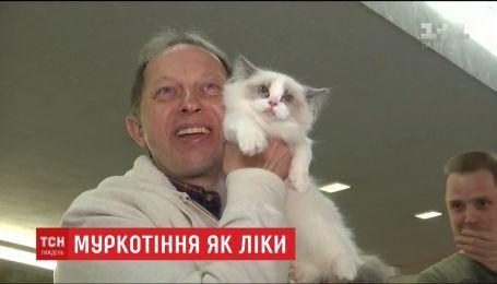 Ученые доказали, что мурлыканье кошек полезное для людей