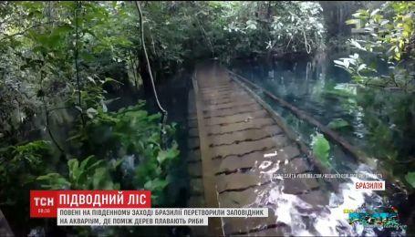 Повені у Бразилії перетворили тропічний заповідник на акваріум