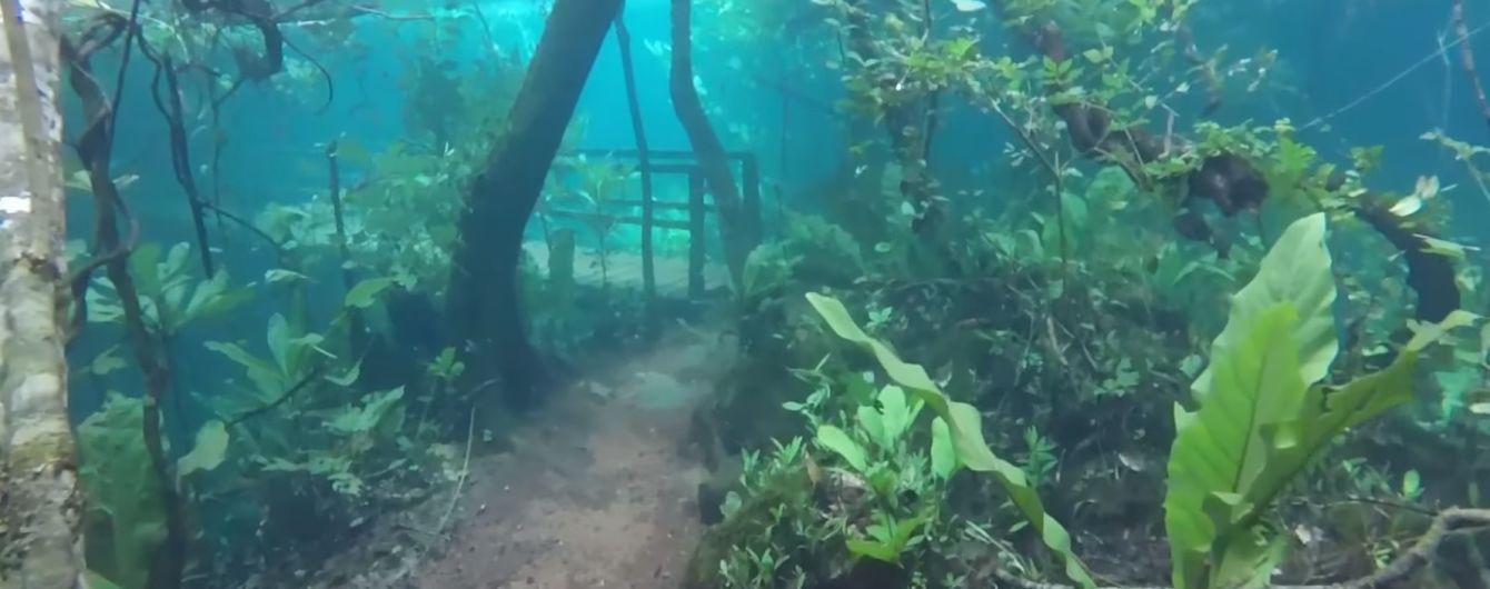 В Бразилии из-за наводнения появился подводный лес