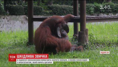 Зоозащитники требуют закрыть зоопарк в Индонезии из-за вредной привычки обезьяны