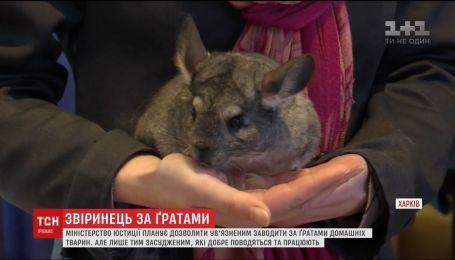 Заключенным могут позволить заводить домашних животных просто в колониях