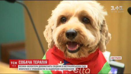 В Сиднее собак сделали помощниками во время судебного процесса