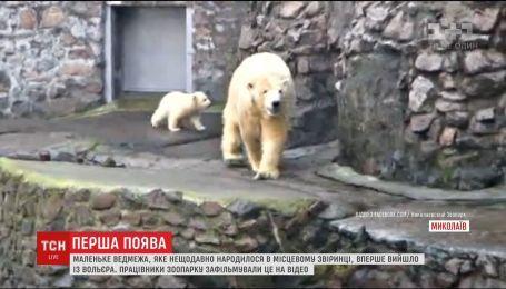Маленький белый медвежонок впервые вышел из вольера на улицу в Николаевском зоопарке