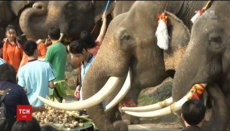 В Аитайи устроили настоящий праздник живота для слонов