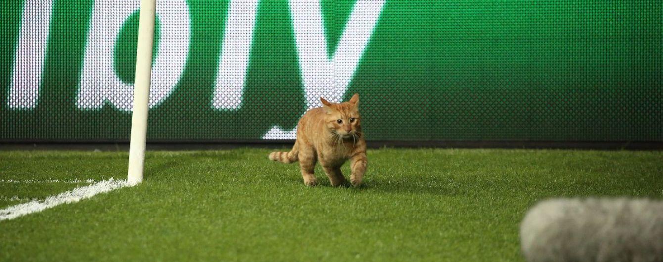 """Рыжий кот """"отобрал"""" у """"Бешикташа"""" больше 30 тысяч евро во время матча Лиги чемпионов"""
