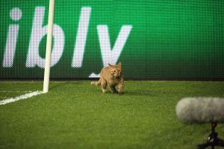 Матч Ліги чемпіонів перервав рудий кіт, який прорвався на поле