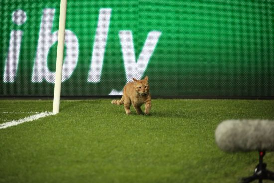 Матч Лиги чемпионов прервал рыжий кот, который прорвался на поле