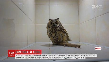 В Днепре патрульные спасли краснокнижную сову с ушибами тела и крыла