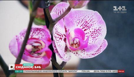 Як підживити рослину: покупні та домашні добрива
