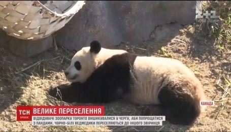 Из зоопарка в Торонто перевезут семью панд
