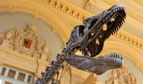 Скелет гігантського динозавра виставлять для огляду в Ейфелевій вежі